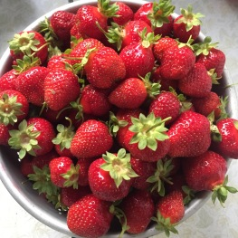 strawberries1